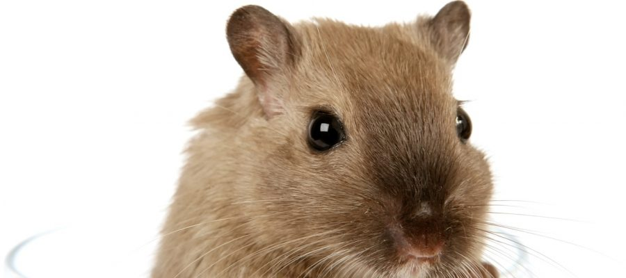 How Poor Plumbing Can Lead to Pests| Home Improvement
