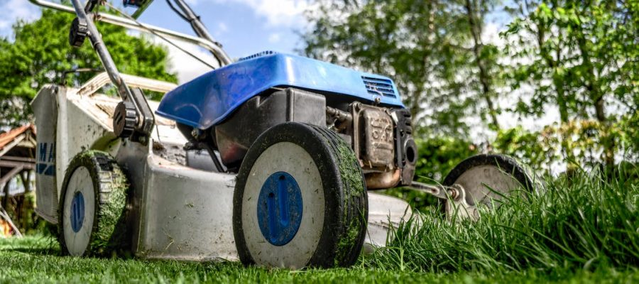 Home Pests to Look out for This Summer