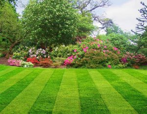 Do You Give Your Lawn Enough Attention?