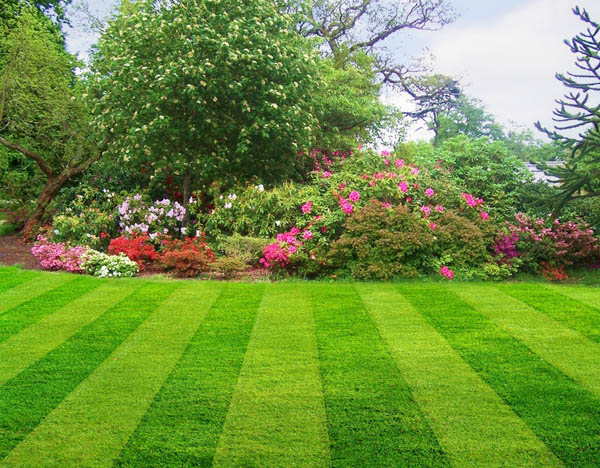 How To Keep Your Lawn Perfect