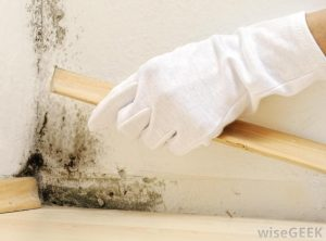 What to Do When You Find Mold in Your Home 2