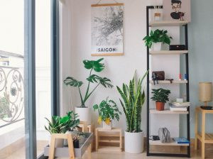 The Top Houseplant Trends For 2020