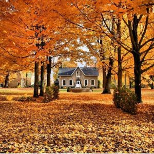7 Reasons for a Fall Deep Clean